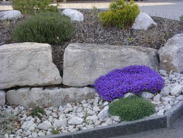 Pflanzen Für Steingarten karpf garten | steingärten
